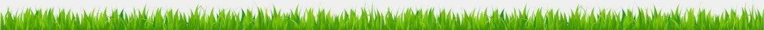 grass bottom
